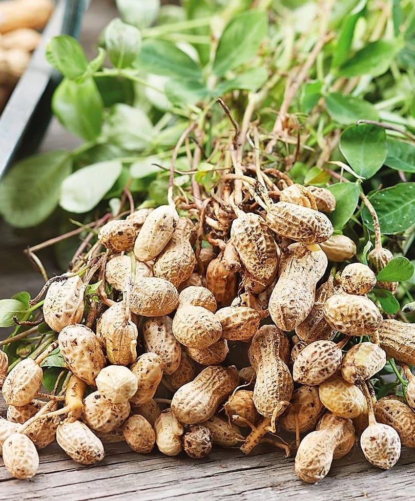 Цена арахиса