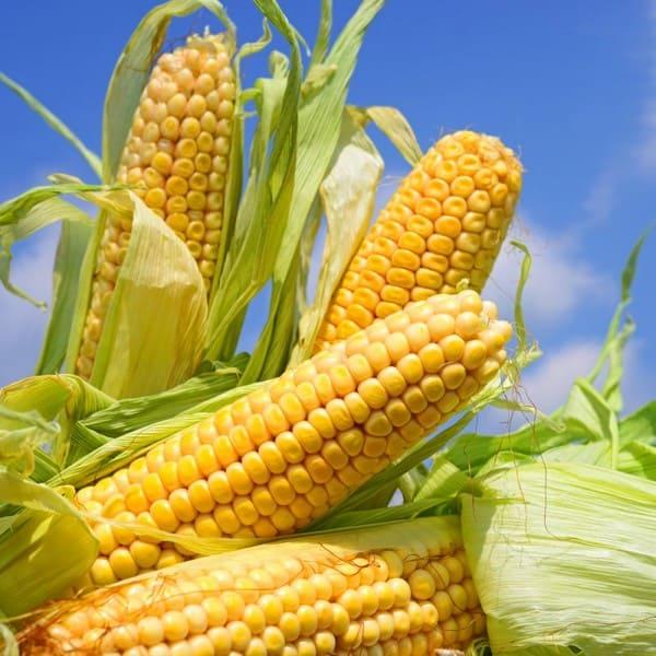 Цена кукурузы