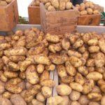 Сколько стоит картошка на рынке?