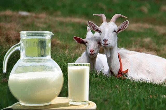 Сколько стоит козье молоко