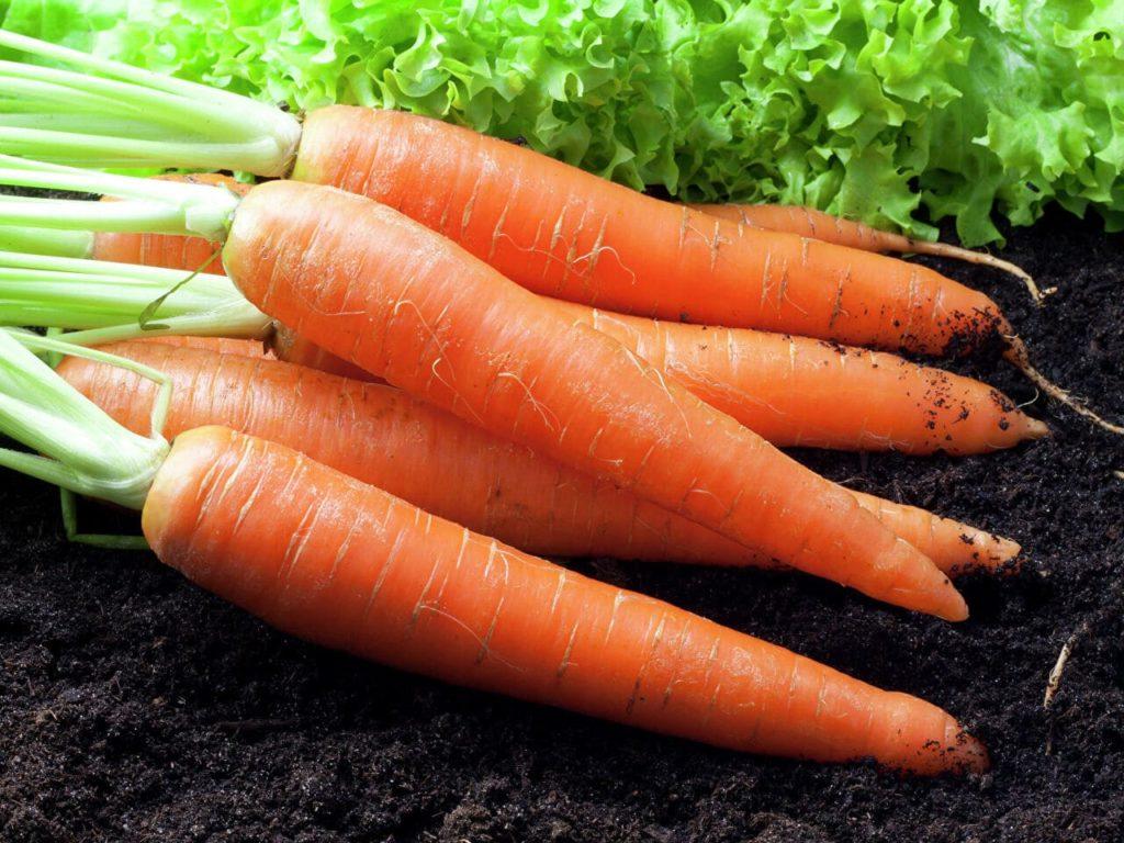 Сколько стоит морковка