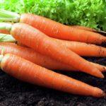 Сколько стоит морковь?