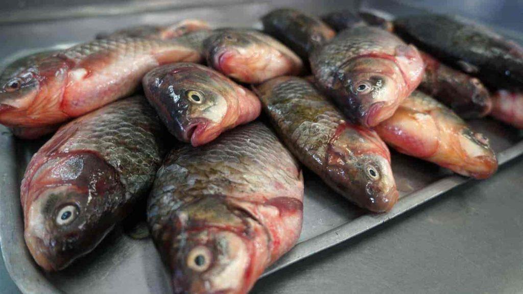 Цена килограмма рыбы