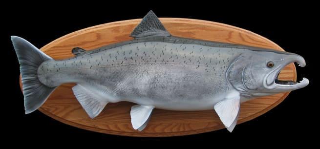 Стоимость рыбы кижуч
