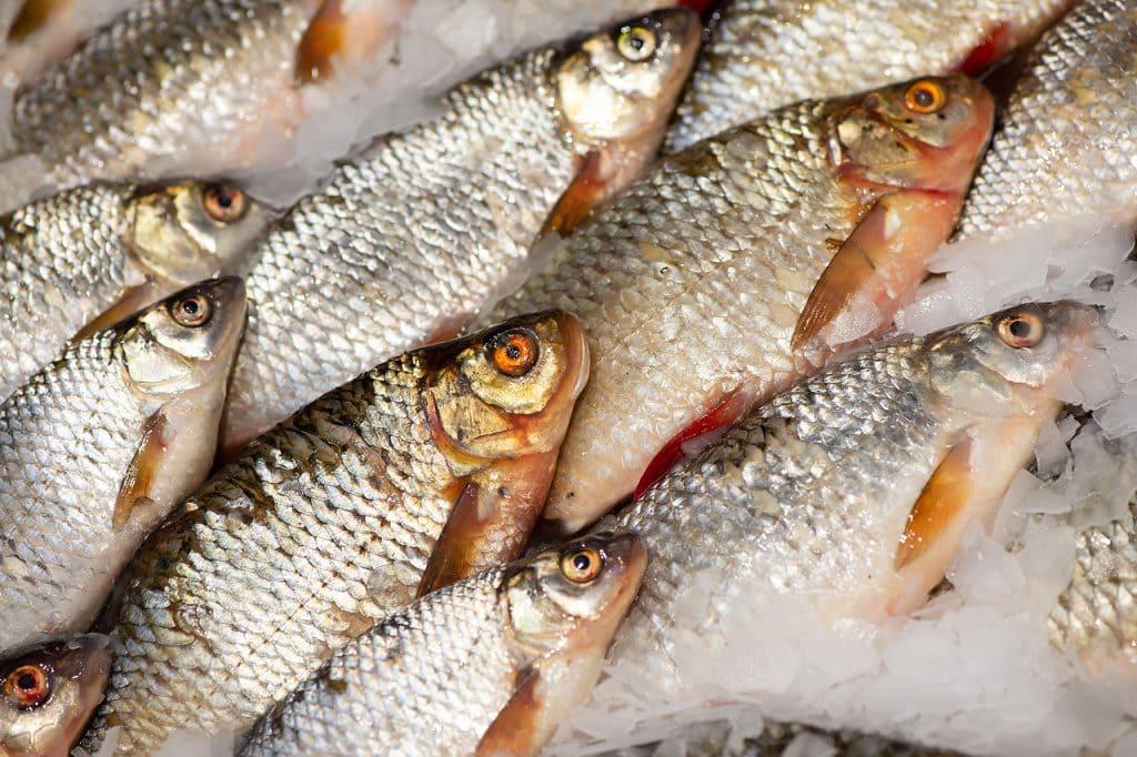 Стоимость свежей рыбы